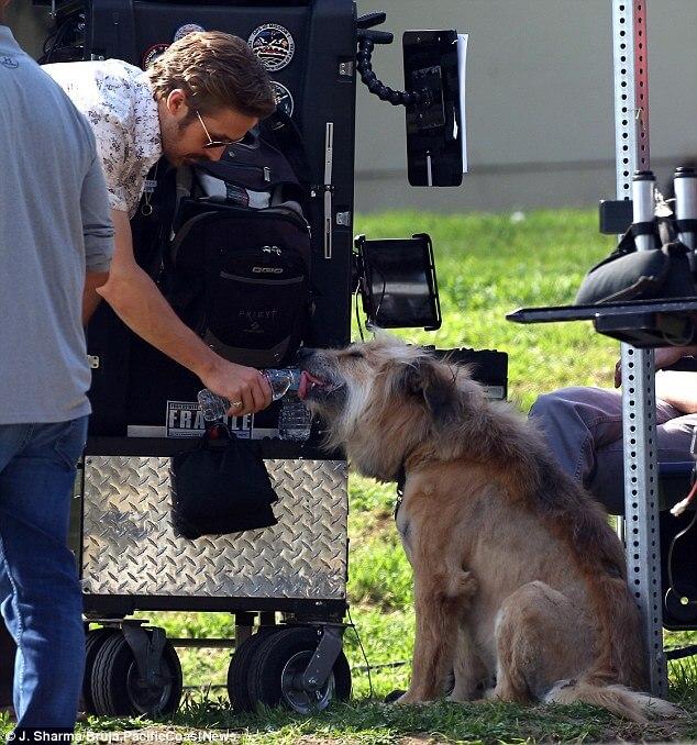 在片場的雷恩葛斯林和他的狗狗喬治。