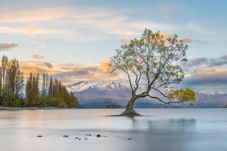 《魔戒》中出現的瓦納卡孤樹。