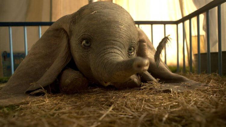 提姆波頓改編同名動畫的真人電影《小飛象》票房不如預期。