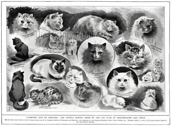 1902 年,畫家路易斯韋恩曾為英國國家貓協會所畫的海報。