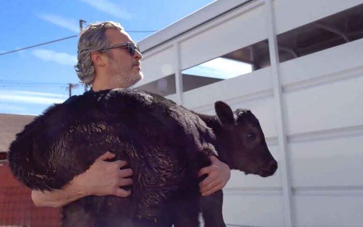 身為素食和環保主義者的 瓦昆菲尼克斯 前往「Pico Rivera」屠宰場解救了母牛和她的新生小牛。
