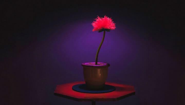 《小魔花》的攝影讓一株植物充滿魔性。