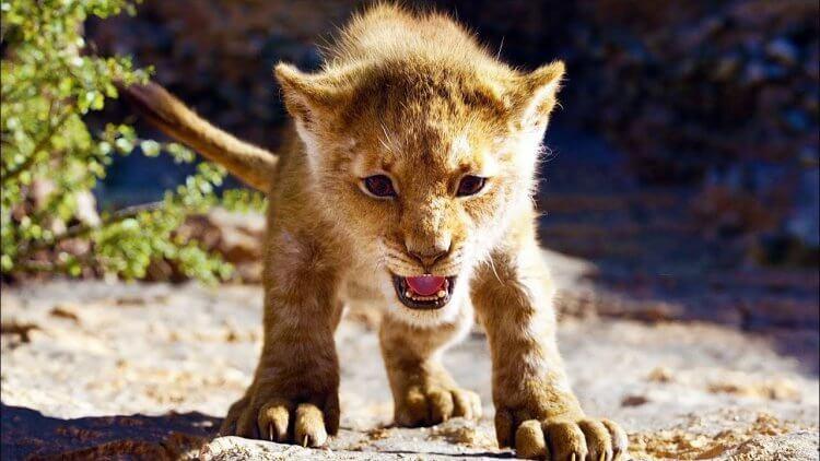 《獅子王》累積票房已經超越自家生產的《冰雪奇緣》,成為影史動畫電影票房之最。