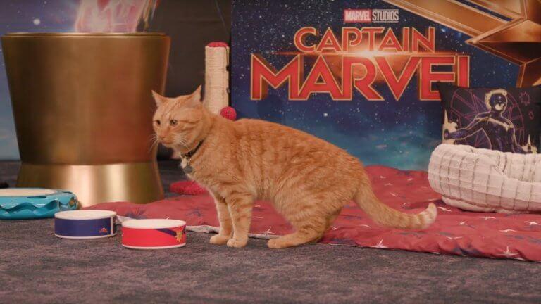《驚奇隊長》(Captain Marvel) 正式上映之後,全球絕對會有大量觀眾被驚奇隊長的貓咪「Goose」(呆頭鵝)圈粉啦!