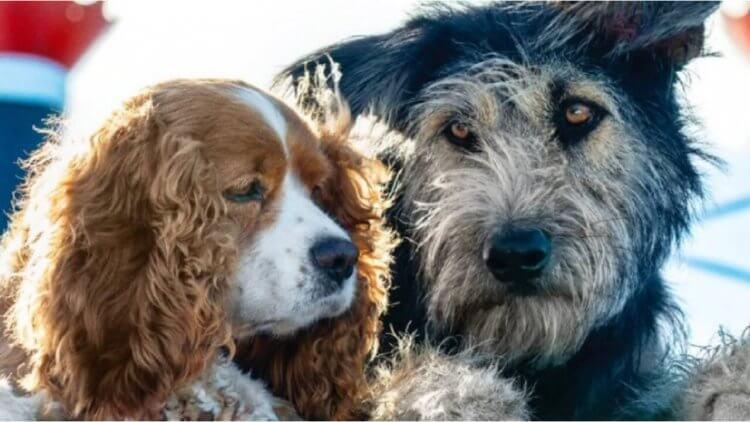 【Disney+】我這人很簡單,有狗就會看!《小姐與流氓》真狗劇照大公開首圖